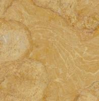 "Small photo of Giallo Reale Marble Polished 12""x12"""